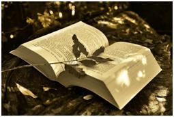 30+ Book Nerd Delights | Laura Grace Weldon